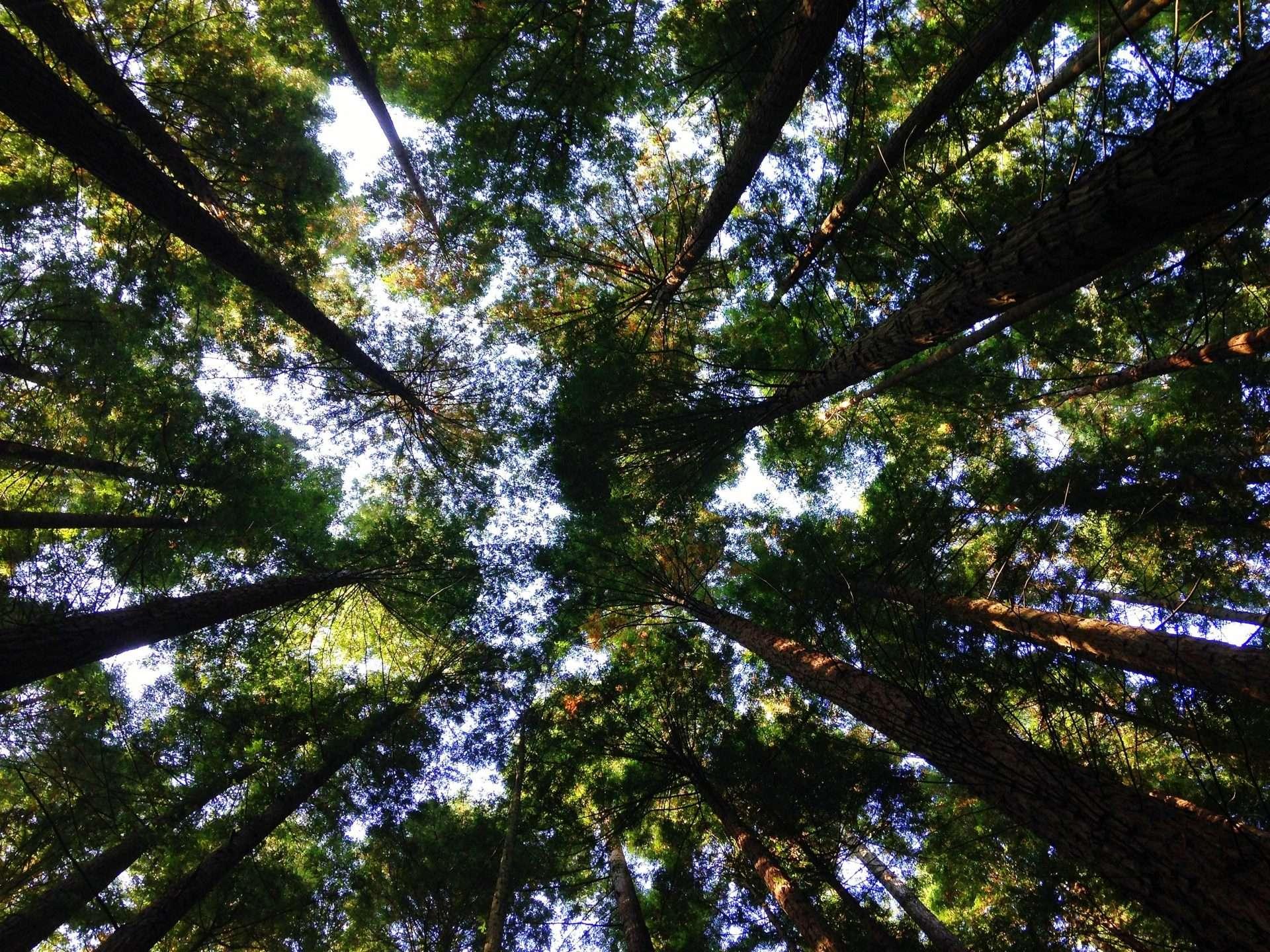 blog prodotti ecologici progetto