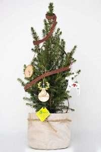 Alberi di natale originali pianta natalizia