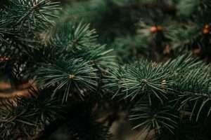 albero di natale ikea vero