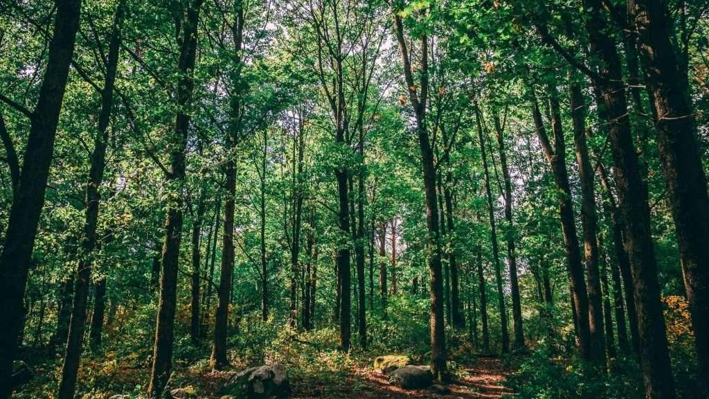 Treedom tree sito per piantare alberi
