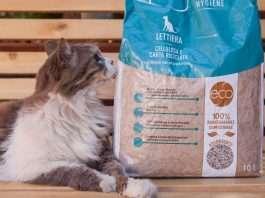 accessori per gatti ecologici